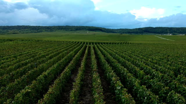 vineyard, trépail, champagne region - french culture stock videos & royalty-free footage