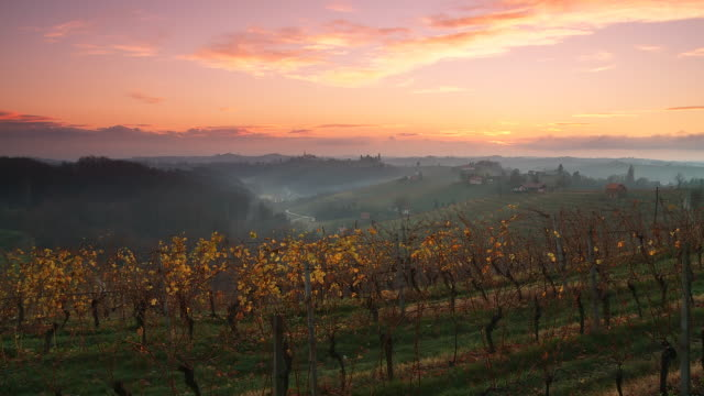 hd dolly: vineyard valley at sunset - monoculture stock videos & royalty-free footage