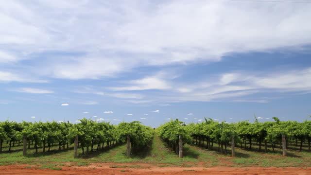 vineyard - vineyard stock videos & royalty-free footage
