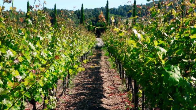 Weergave van de wijngaard