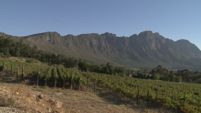 ws pan vineyard with franschhoek mountains backdrop, franschhoek, western cape, south africa - franschhoek stock videos and b-roll footage