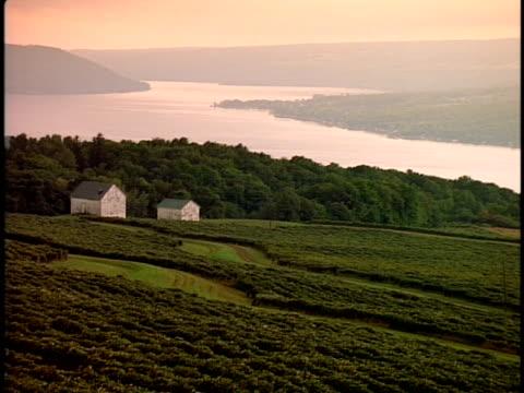 stockvideo's en b-roll-footage met ws, vineyard with lake in background, new york state, usa  - plate met stilstaande achtergrond