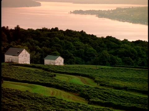 stockvideo's en b-roll-footage met zo, ws, vineyard with lake in background, new york state, usa  - plate met stilstaande achtergrond