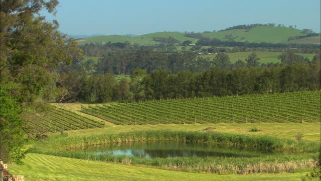 WS, vineyard with pond in foreground, Healesville, Victoria, Australia