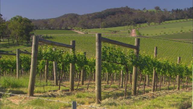 stockvideo's en b-roll-footage met ms, vineyard with pond in foreground, healesville, victoria, australia - houten paal