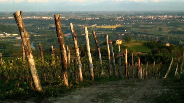 cu zo ws vineyard with rural landscape and snow capped mountains in distance, piedmont, italy - peter snow stock videos & royalty-free footage