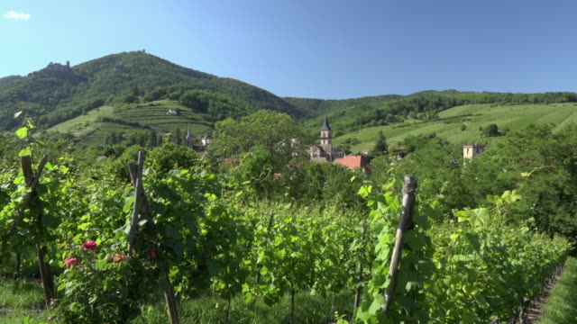 Vineyard with St.-Gregor-Church in Ribeauville