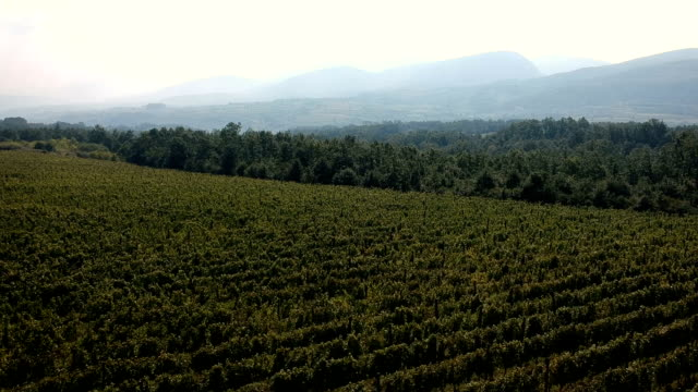 vineyard.drone point of view