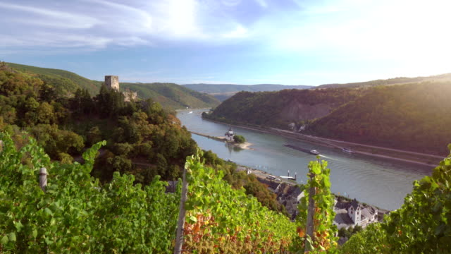 vineyards above the rhine - upper palatinate stock videos & royalty-free footage