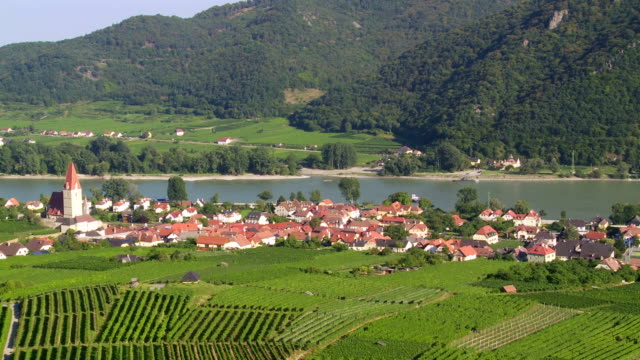ts pan vineyards above weissenkirchen in danube valley - austria stock videos & royalty-free footage