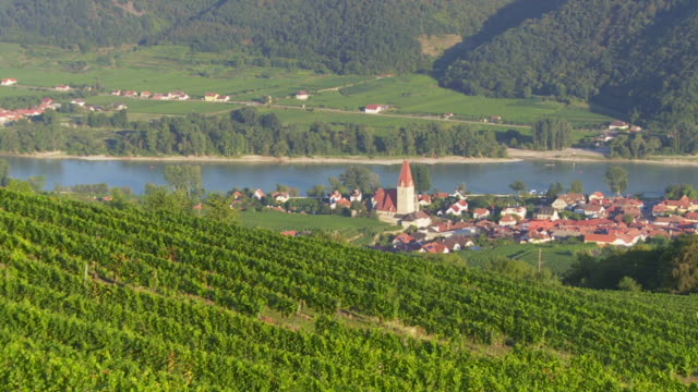 pan vineyards above weissenkirchen in danube valley  - river danube video stock e b–roll