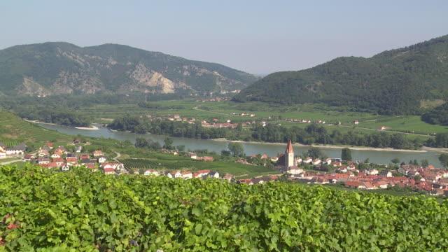 pan vineyards above weissenkirchen in danube valley  - donau stock-videos und b-roll-filmmaterial