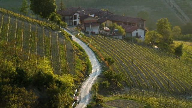 zo ws ha vineyards and winding road rural landscape, piedmont, italy - farmhouse stock videos & royalty-free footage