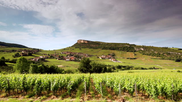 Vineyards around the village of Vergisson, France.