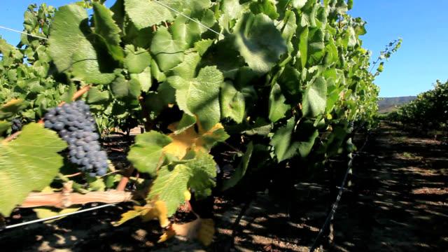 stockvideo's en b-roll-footage met vineyards, chile - chile