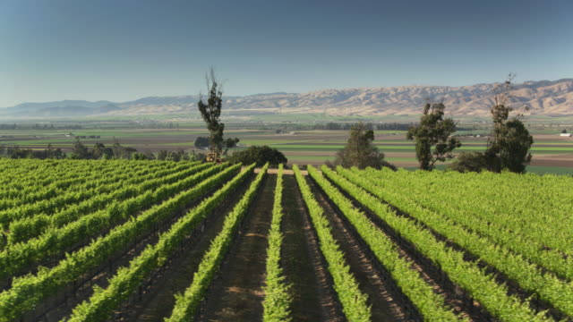 vineyards, farms and barren mountains in monterey county, california - drone shot - monterey county stock videos and b-roll footage