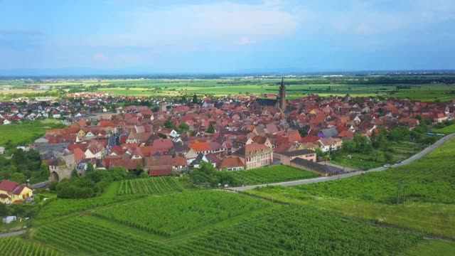 Vineyards in Alsace aerial drone video