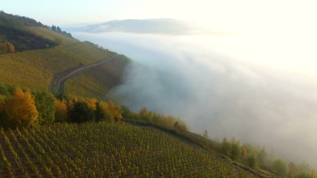 vineyards in autumn, saarburg, saar valley, rhineland-palatinate, germany, europe - ブドウ畑点の映像素材/bロール