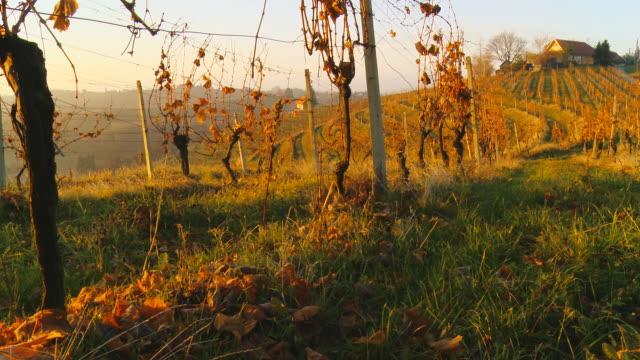 stockvideo's en b-roll-footage met hd dolly: vineyards in autumn - kleurtoon