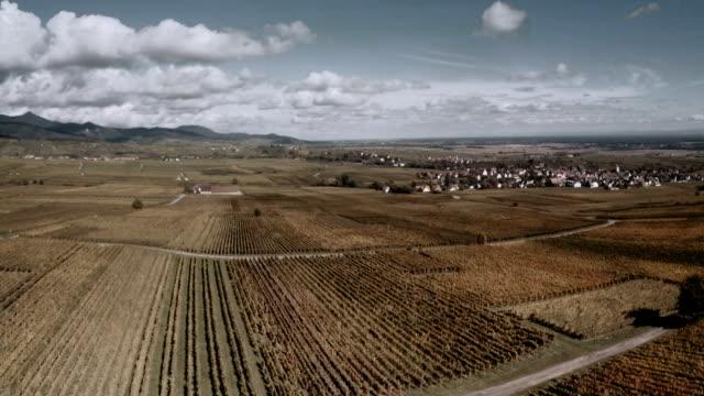 vidéos et rushes de vignobles en automne - valley
