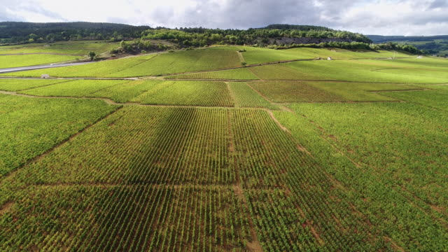 vineyards in autumn with beautiful light - aquitaine stock videos and b-roll footage
