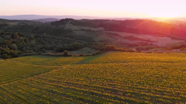 vineyards in chianti hills from drone - vineyard stock videos & royalty-free footage