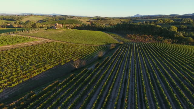 vineyards in montepulciano wine region, tuscany, italy - collina video stock e b–roll