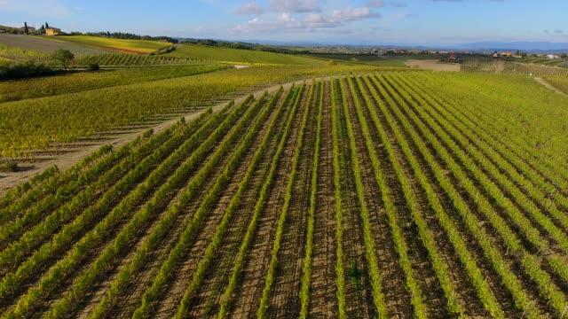 vineyards in montepulciano wine region, tuscany, italy - montepulciano stock videos & royalty-free footage
