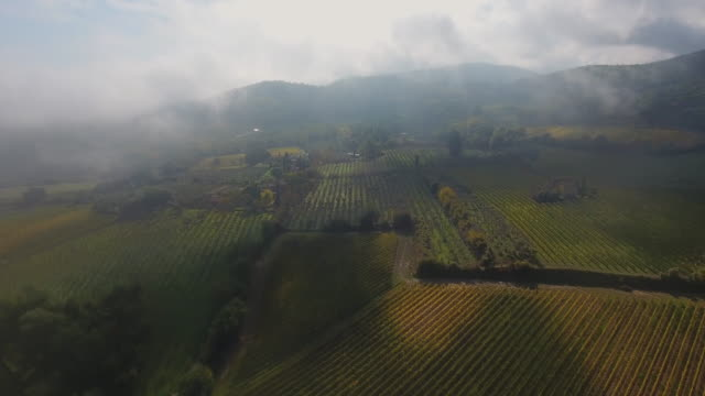 vineyards in montepulciano wine region, tuscany, italy - tuscany stock videos & royalty-free footage