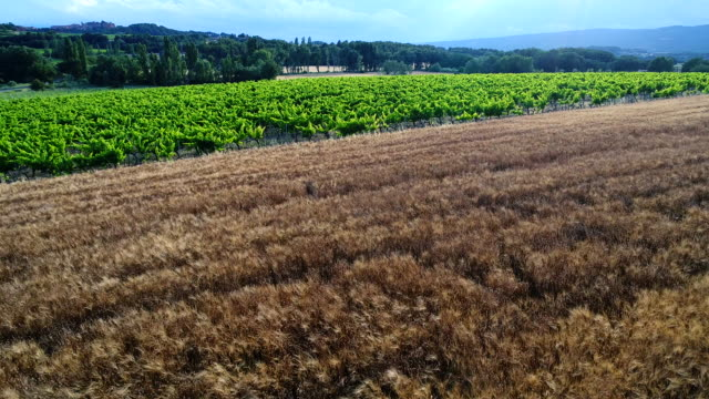 vineyards in provence, france - luberon stock-videos und b-roll-filmmaterial