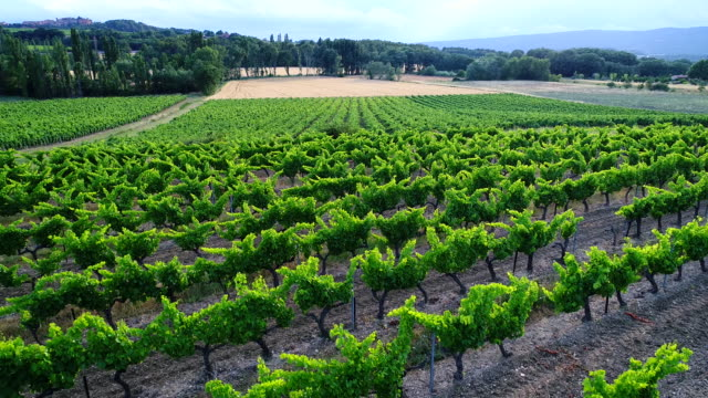 vineyards in provence, france - luberon video stock e b–roll