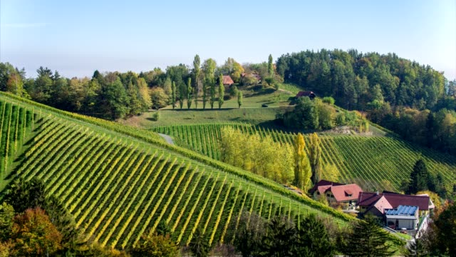 stockvideo's en b-roll-footage met vineyards in south styria / austria - aerial view - source file cinema dng - meer dan 50 seconden