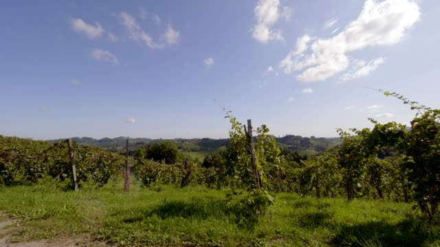 vineyards in southern styria, austria - cabernet sauvignon grape stock videos and b-roll footage