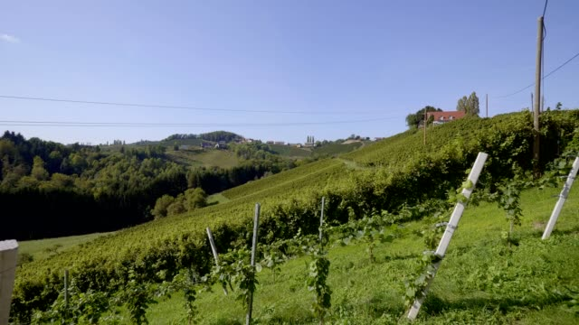 vineyards in southern styria, austria - grape leaf stock videos & royalty-free footage