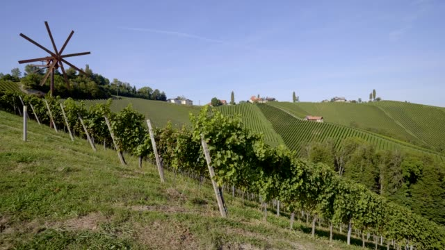 vineyards in southern styria, austria - austrian culture stock videos & royalty-free footage