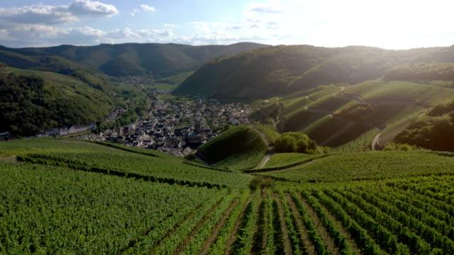vineyards in the ahr valley - weinberg stock-videos und b-roll-filmmaterial