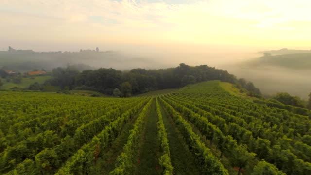AERIAL Vineyards In The Fog