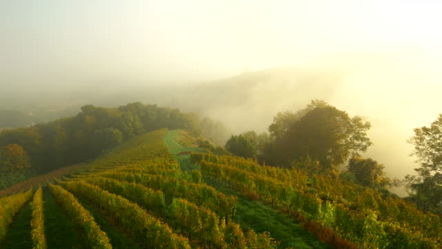 aerial vineyards in the morning - vineyard stock videos & royalty-free footage