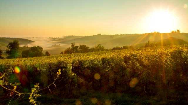 t/l vineyards in the sunrise - vine stock videos & royalty-free footage