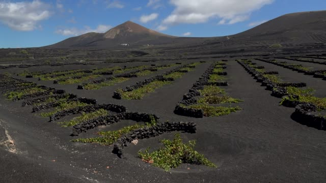 vineyards in the valley of la geria, lanzarote, canary islands, spain, atlantic, europe - atlantic islands stock videos & royalty-free footage