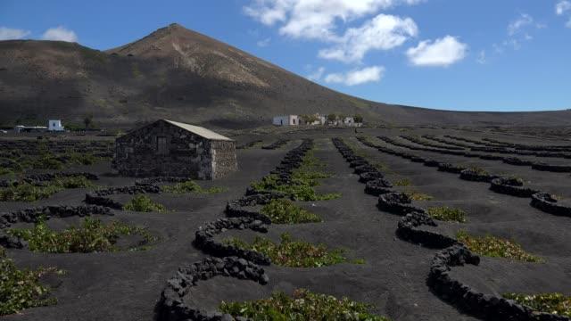 vineyards in the valley of la geria, lanzarote, canary islands, spain, atlantic, europe - atlantic islands stock videos & royalty-free footage