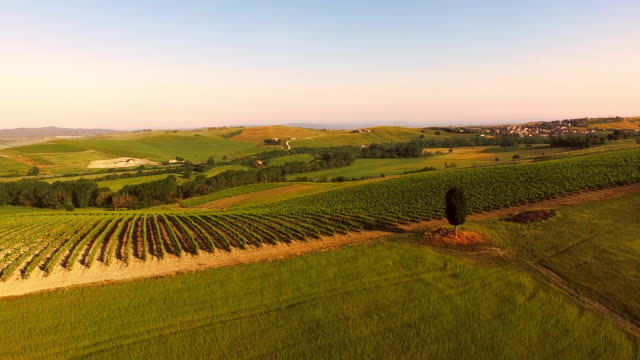 aerial vineyards in tuscany - tuscany stock videos and b-roll footage