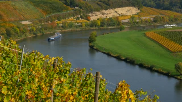 vineyards in upper moselle valley near palzem, rhineland-palatinate, germany, europe - upper palatinate stock videos & royalty-free footage