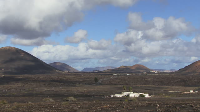 ws, vineyards in volcanic landscape, la geria, lanzarote, canary islands, spain - fan palm tree stock videos and b-roll footage