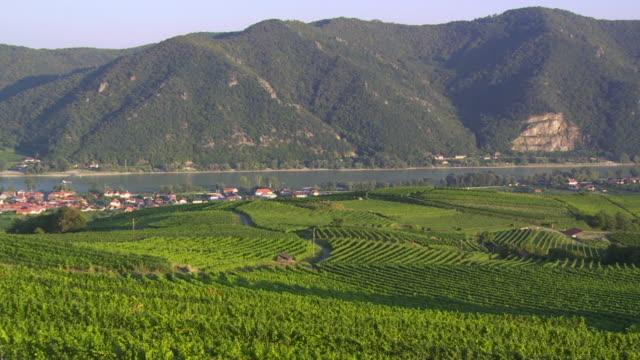 WS PAN Vineyards in Wachau Area in Lower Austria