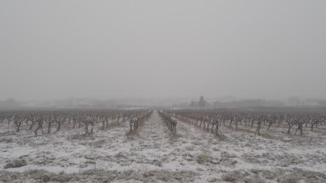 vídeos de stock, filmes e b-roll de vineyards in winter with snow - geada