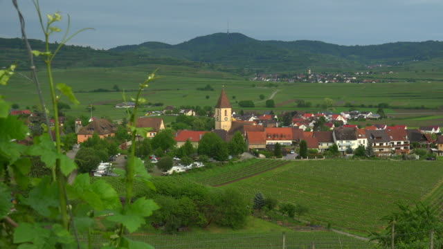 vineyards near burkheim, kaiserstuhl, baden-wurttemberg, germany - baden wurttemberg stock videos and b-roll footage