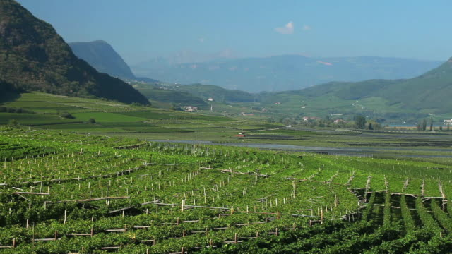 Vineyards near Tramin in South Tyrol PAN