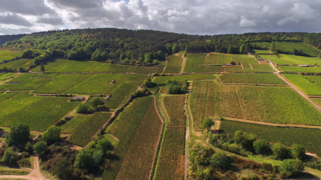 Vineyards of Burgundy area in France from a drone flying back