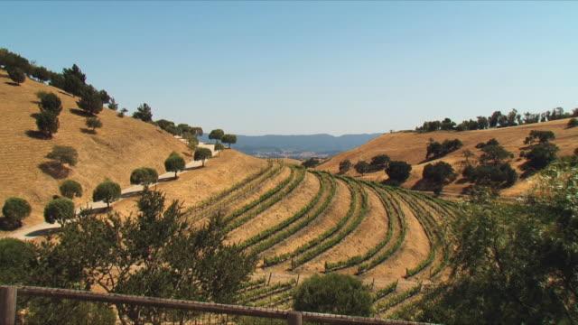 WS HA Vineyards / Santa Barbara, California, USA